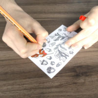 oak leaves and acorns - coloring stickers action shot