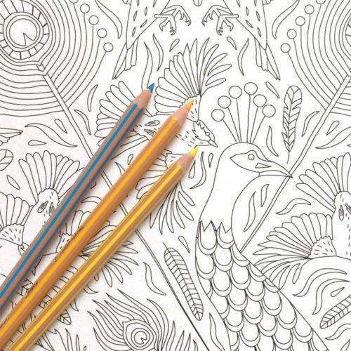 peacock coloring poster close-up
