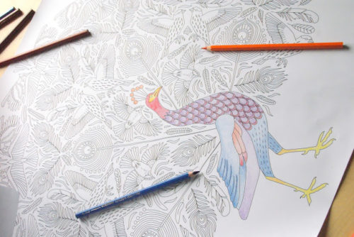 peacock coloring poster birds pattern coloring page peacock feathers