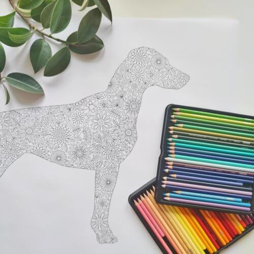 dog breed silhouette adult coloring poster